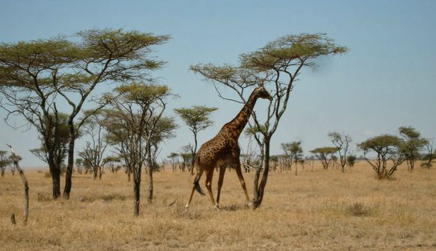 What to Pack for Kenya and Tanzania: Safari and Island Resort Vacation