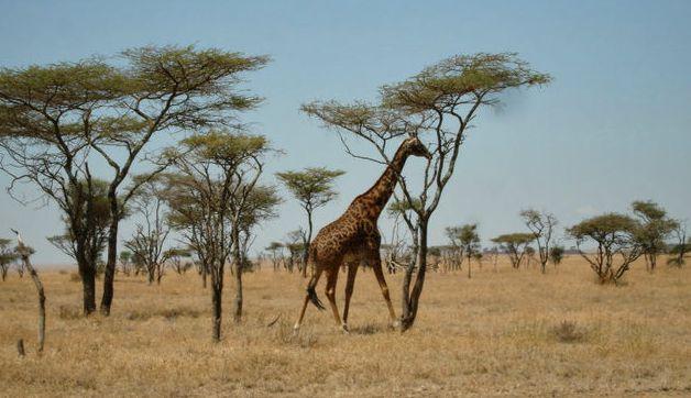 What to Pack for Kenya and Tanzania: Safari and Island Resort Vacation