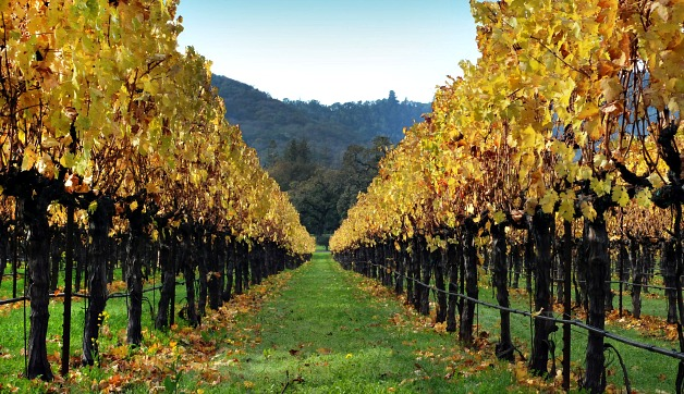 What to Wear in Napa Valley throughout the Year