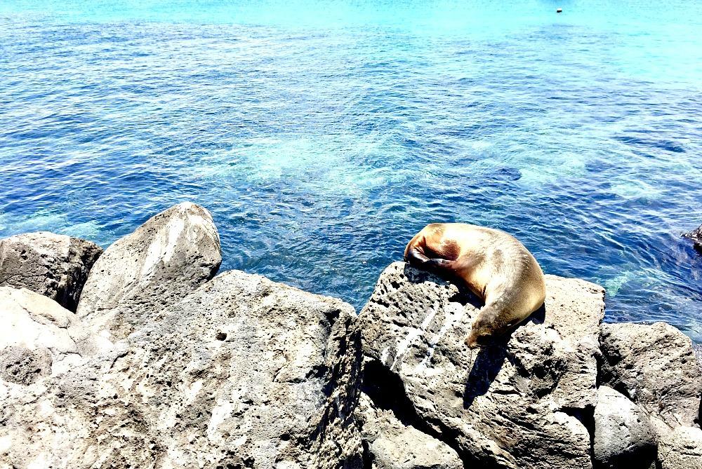 galapagos-scuba-diving-trip