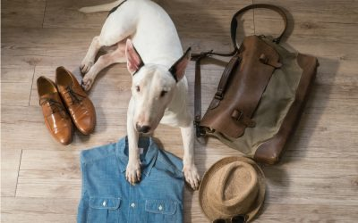 How to Travel With Pets and Things to Pack
