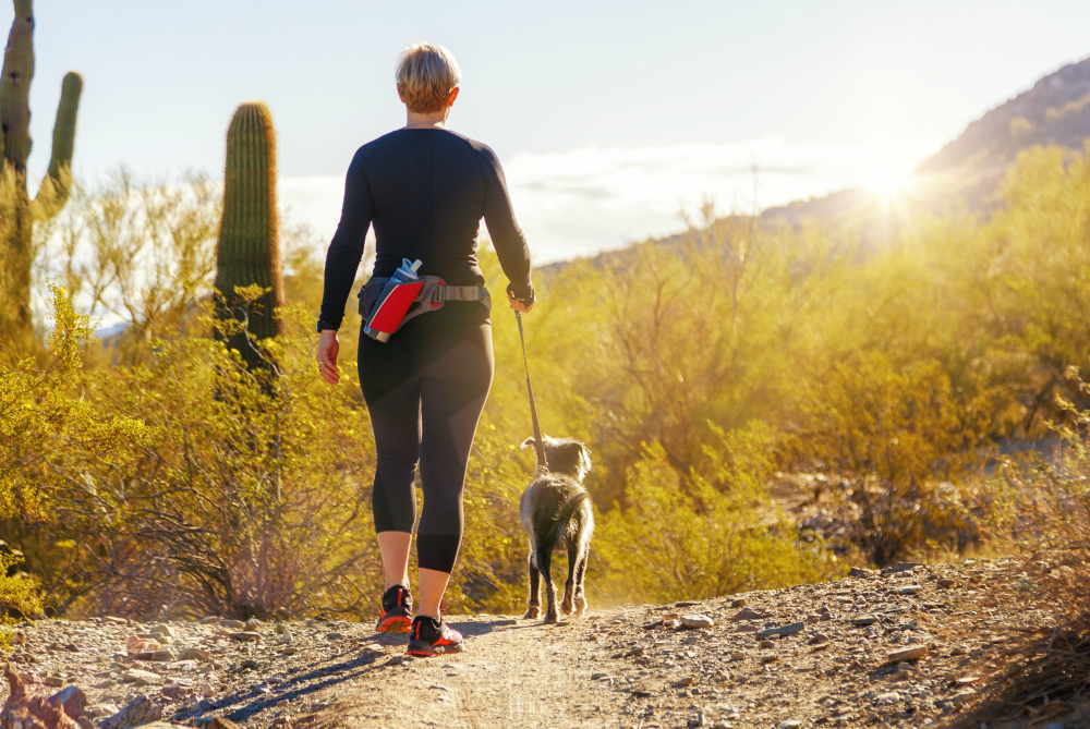 Best Hiking Gear for Dogs to Join Your Wilderness Adventures